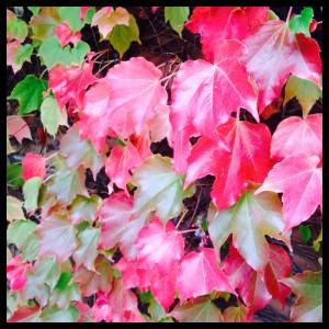 plantas colores tossa