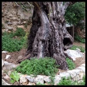 trail rotova arbol ruta