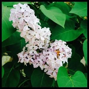 mas de xeta flor luciapascual