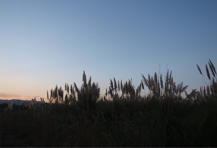 marjal-foto1-luciapascual