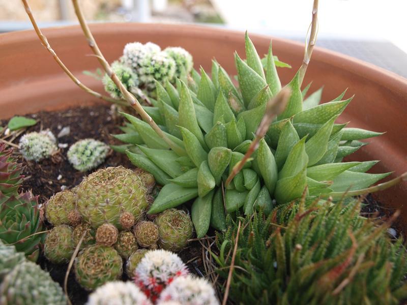 cactus-jardin-luciapascual