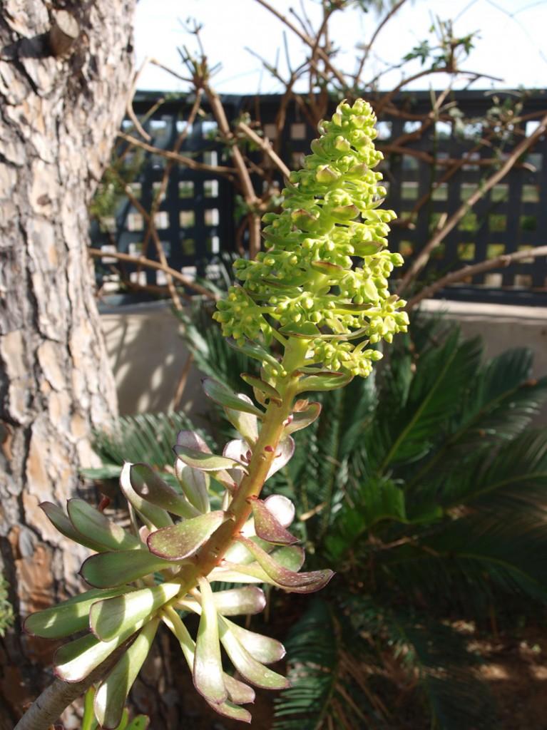 flor-jardin-luciapascual