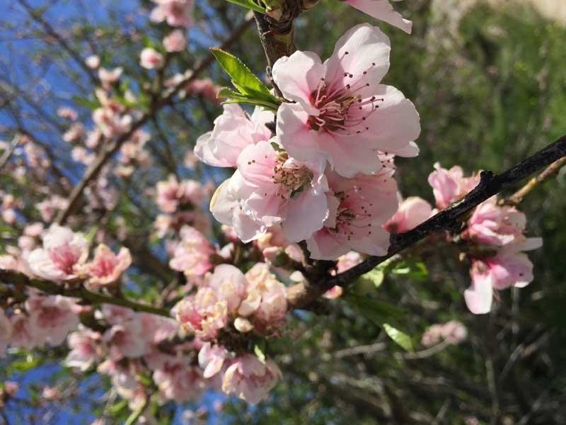 running-primavera-lucia-pascual-foto-2